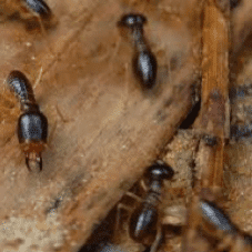 Wood Destroying Insects and Pests inspection